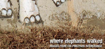 Where Elephants Walked